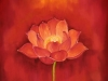 red-lotus-close-up-for-