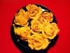 yellow-roses-on-red